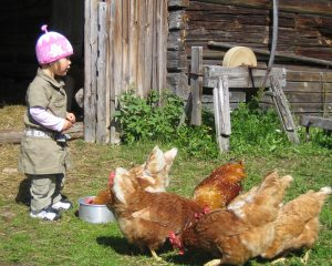 tyttö-ja-kanat