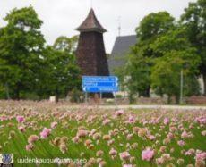 Kirkon torni ja kukkaniitty.
