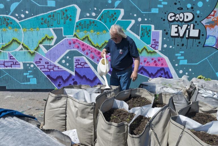 Mies kastelee kastelukannulla kaupunkiviljelmää graffitiseinän edessä.